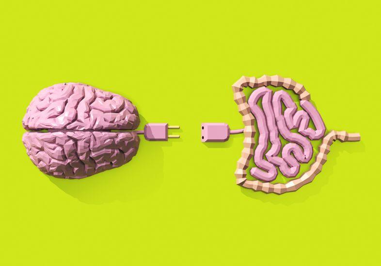 Conexión Intestino-Cerebro