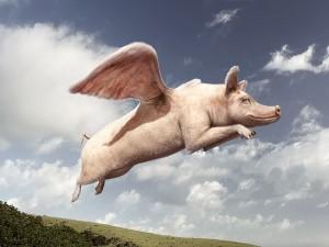 cerdovolador