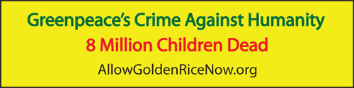 Allowgoldenrice