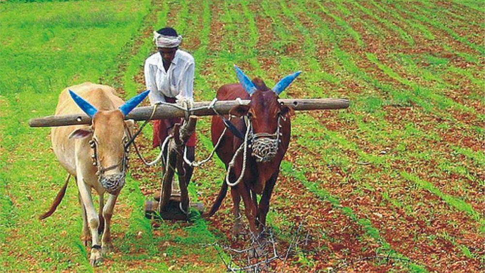Agricultura y ganadería, una historia de éxito