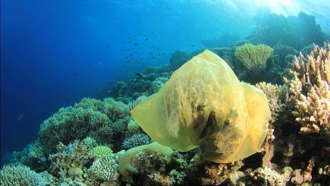 La contaminación con plástico. Un problema de verdad.